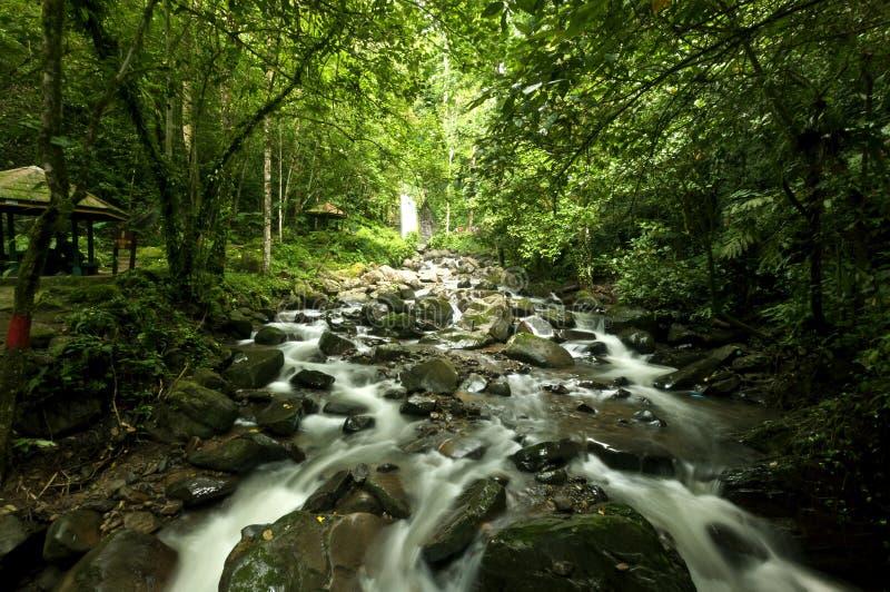 Mahua Waterfall royalty free stock photography