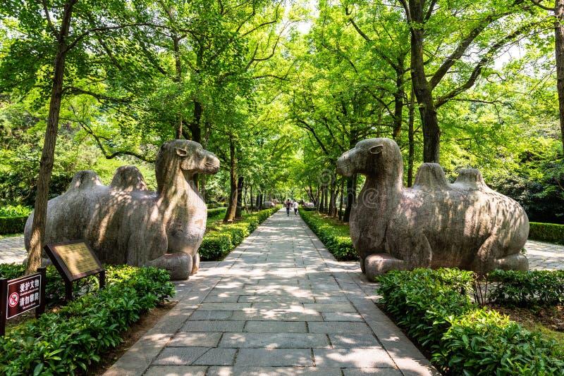 Mai 2017 Chine d'†touristes «d'†de Nanjing, Jiangsu, «marchant le long de la manière sacrée dans le mausolée de Ming Xiaoli photos stock