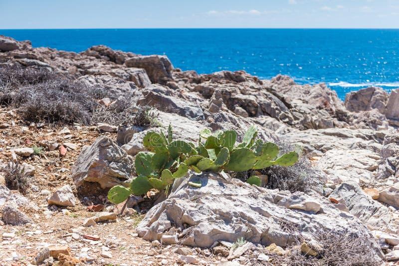 5 mai 2019, Dubrovnik, Croatie Île de Locrum photographie stock