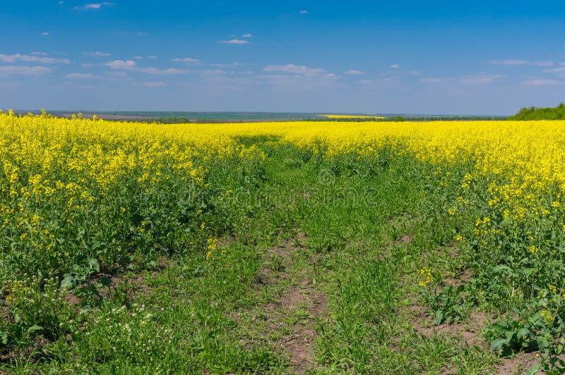mai landschaft mit blauem himmel und bl hendem rapssamenfeld stockbild bild von ukraine. Black Bedroom Furniture Sets. Home Design Ideas