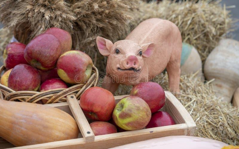 Maiale dell'argilla su fieno con le mele, composizione fotografia stock