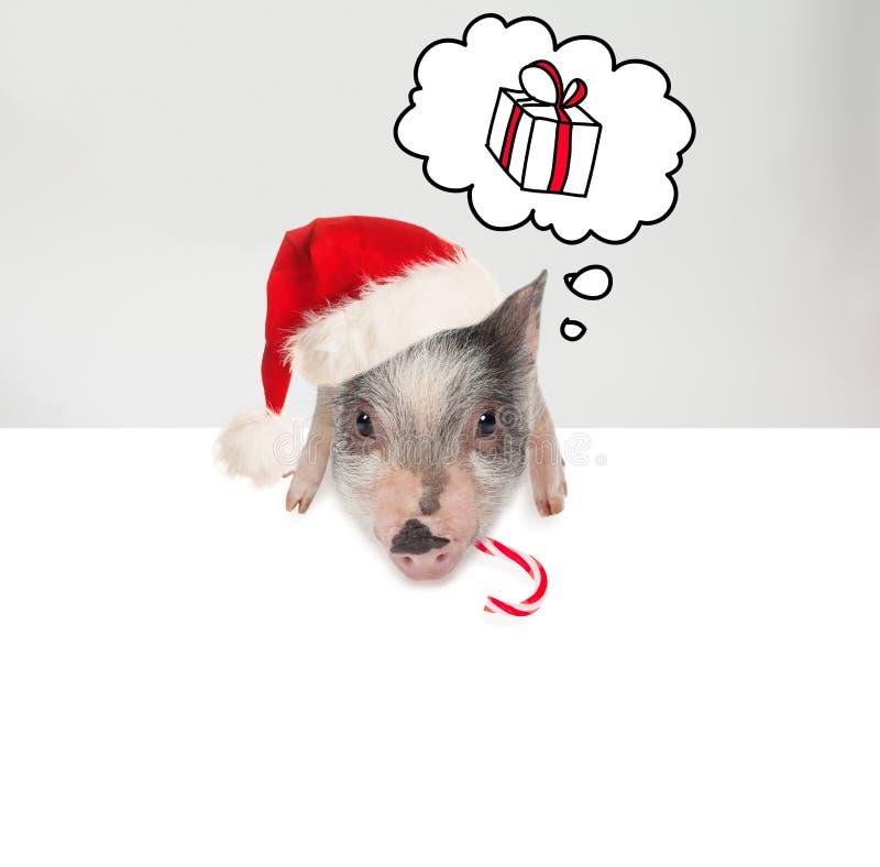 Maiale sveglio in cappello di Santa che tiene il fondo bianco del bordo dell'insegna Concetto anno di nuovo e di natale fotografie stock