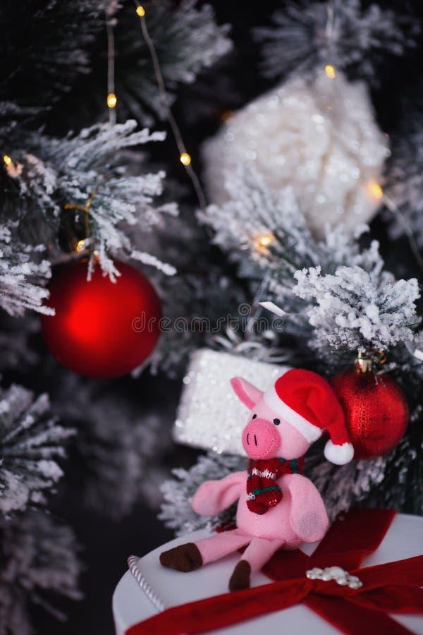 Maiale sveglio del giocattolo in cappello e sciarpa di Santa che si siedono vicino al Natale decorato abete ed al contenitore di  fotografie stock