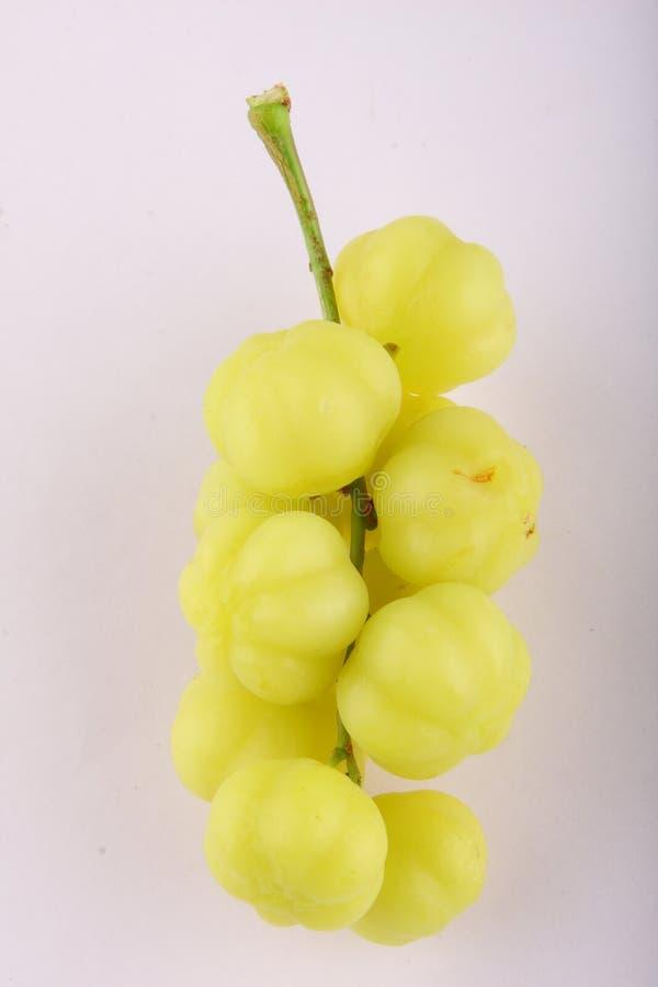 Maid oder grosella Frucht stockbilder