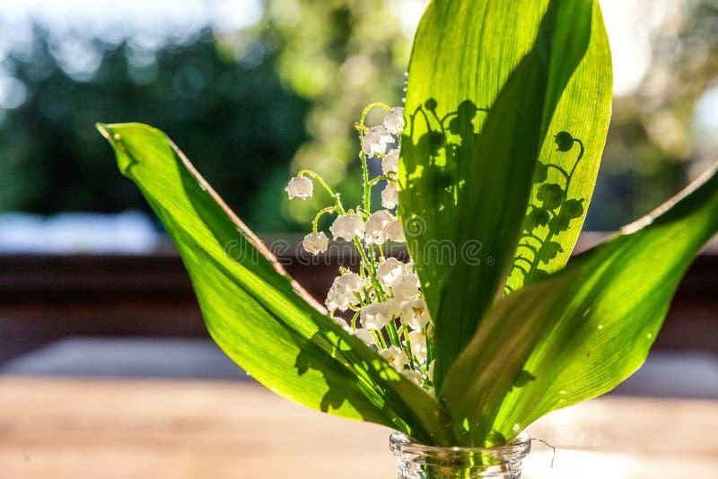 Maiglöckchen oder Könnenlilie stockfotografie