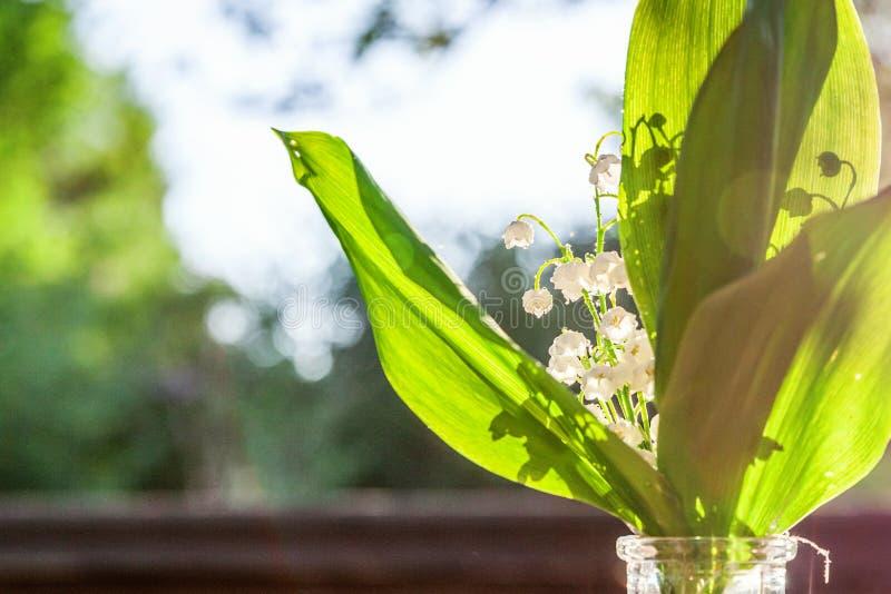 Maiglöckchen oder Könnenlilie lizenzfreie stockfotos
