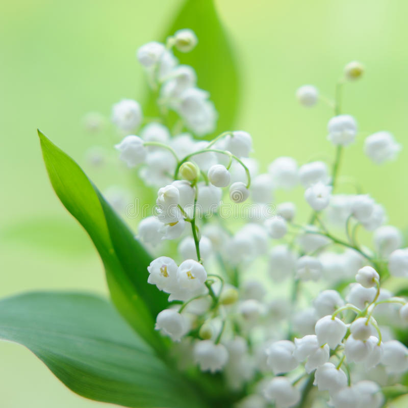Maiglöckchenblumenstrauß lizenzfreie stockbilder