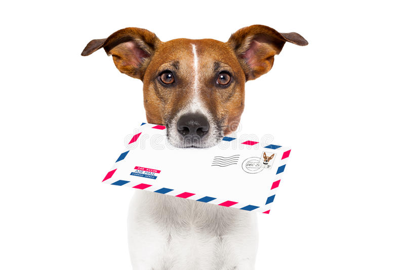 Mail dog. Dog with glasses delivering air mail envelope with stamp