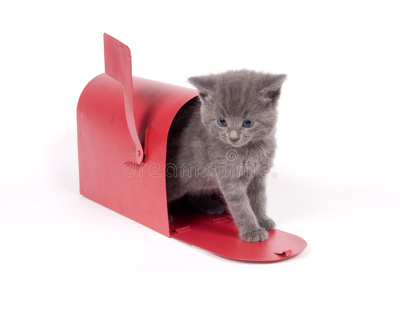 Download Mail order kitten stock image. Image of gray, newborn - 2434529