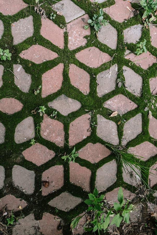 Maillon en pierre de pavement avec fond de mousse verte images libres de droits