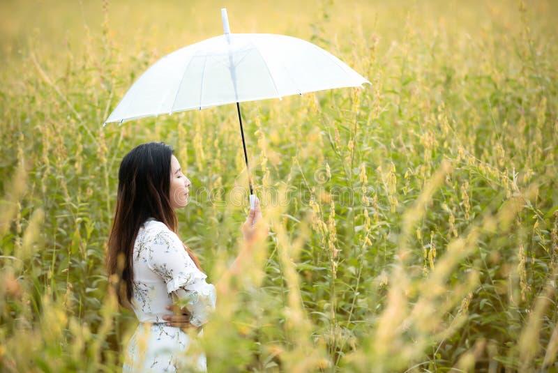 Main asiatique heureuse de mode de vie de femme tenant le parapluie dans le lever de soleil de fleur de jaune d'automne de pré Ex images stock