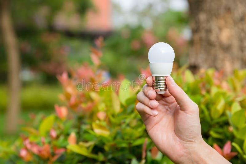 Main avec l'ampoule images libres de droits