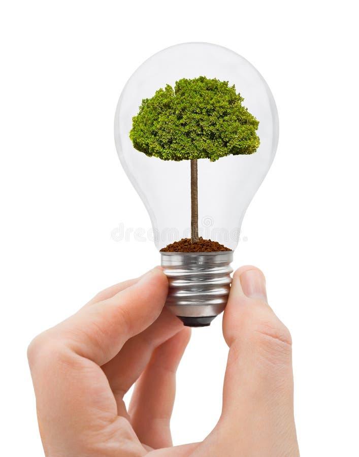 Main avec l'ampoule et l'arbre images stock