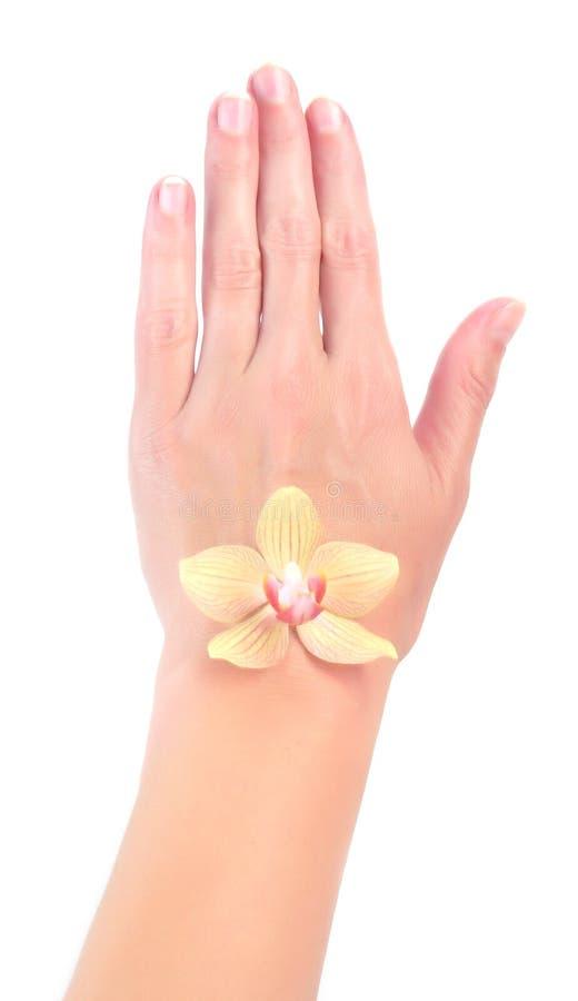main avec l'orchidée photos libres de droits