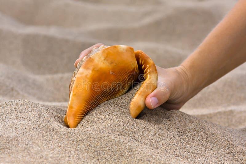 Main avec la coquille de mer dans la plage photo libre de droits