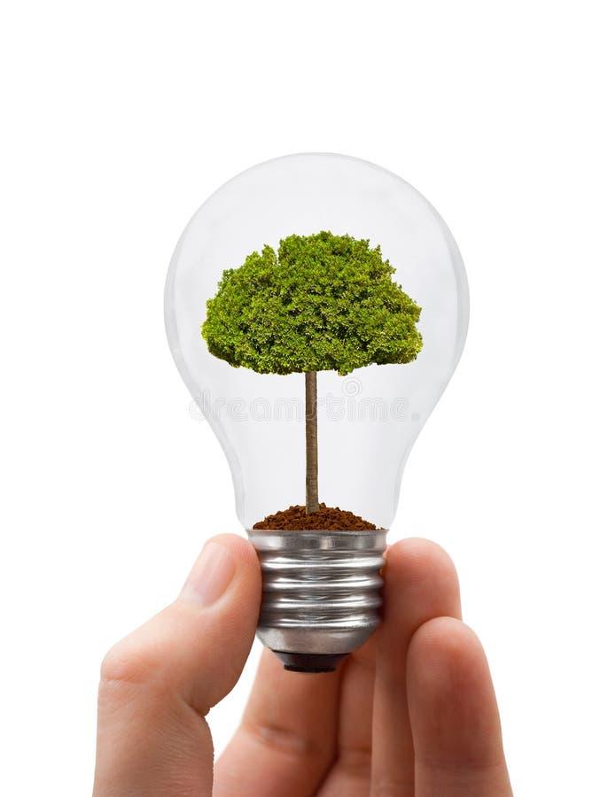 Main avec la lampe et l'arbre photo stock