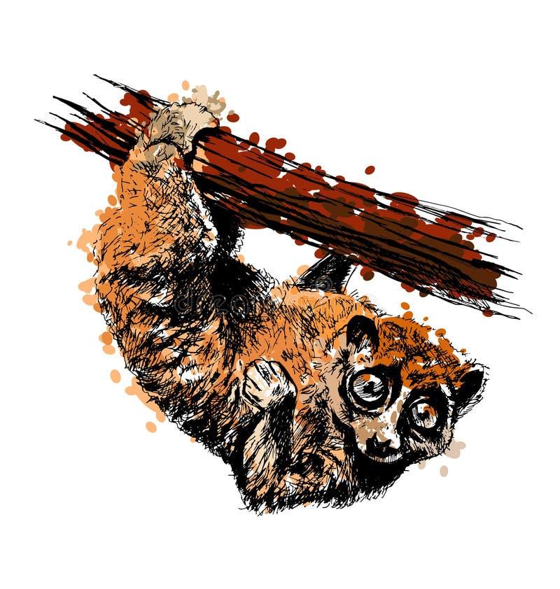 Main colorée loris lents de dessin d'un Sunda illustration de vecteur