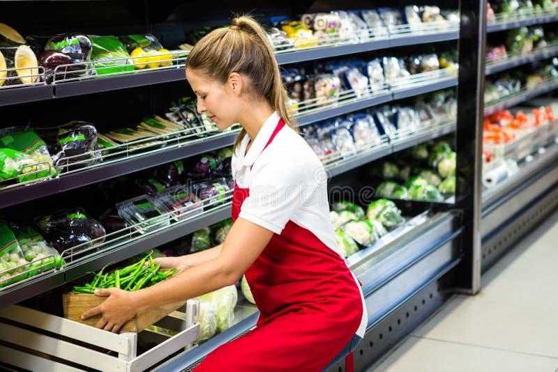Main-d'œuvre féminine mettant la boîte végétale dans l'étagère photos stock