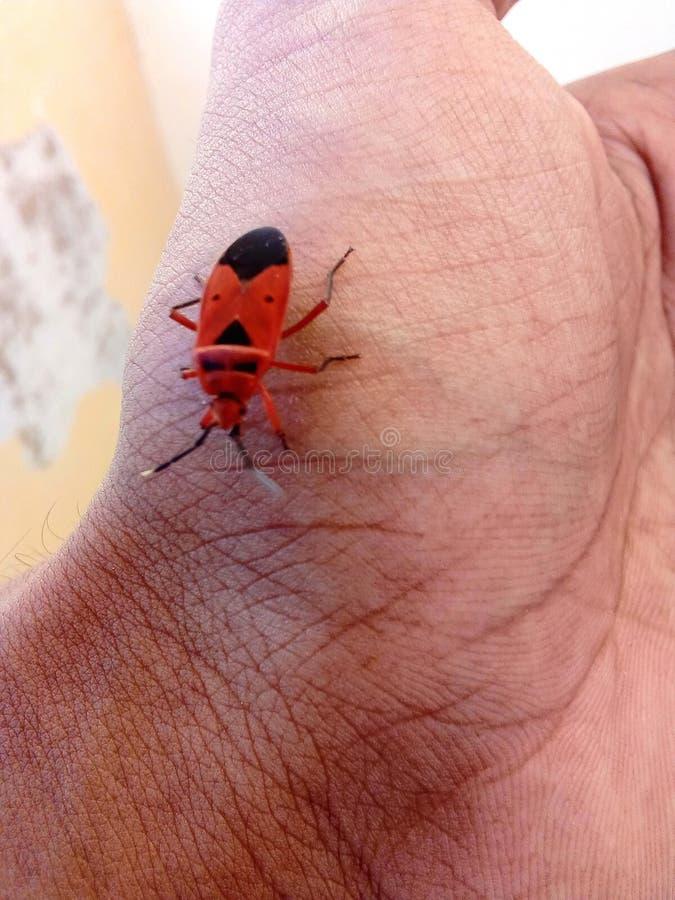 Main d'insertion d'insecte image libre de droits
