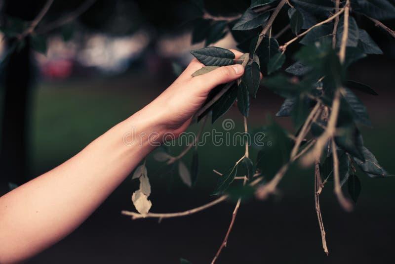 Download Main D'une Branche D'arbre émouvante De Femme Photo stock - Image du organique, closeup: 45371198