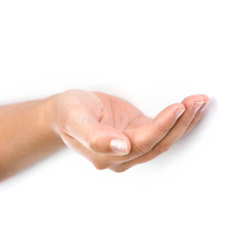 Main de femme d'isolement sur le fond blanc photo libre de droits