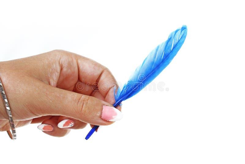 Main de femme tenant la plume d'oiseau bleue sur le fond blanc d'isolement de coupe-circuit Photo de studio avec l'allumage de st images libres de droits