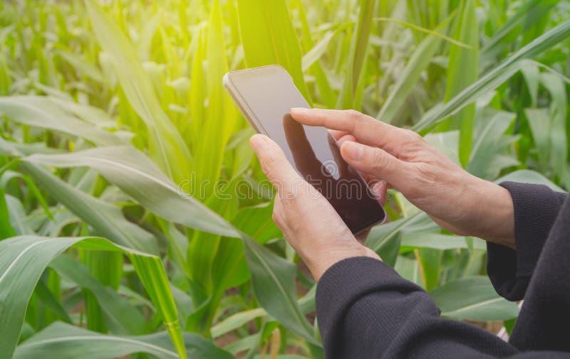 Main de la femme employant le téléphone intelligent, la causerie personnelle, et le media social photos stock