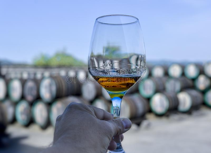 Main de Sommelier tenant un verre avec du vin à l'intérieur photo libre de droits
