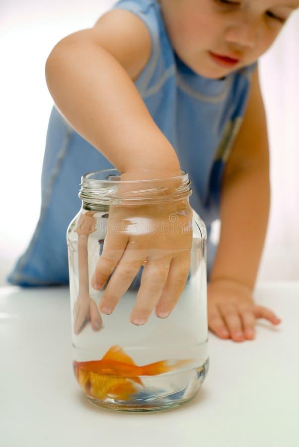 Main de todder de garçon dans la cuvette de poissons photographie stock