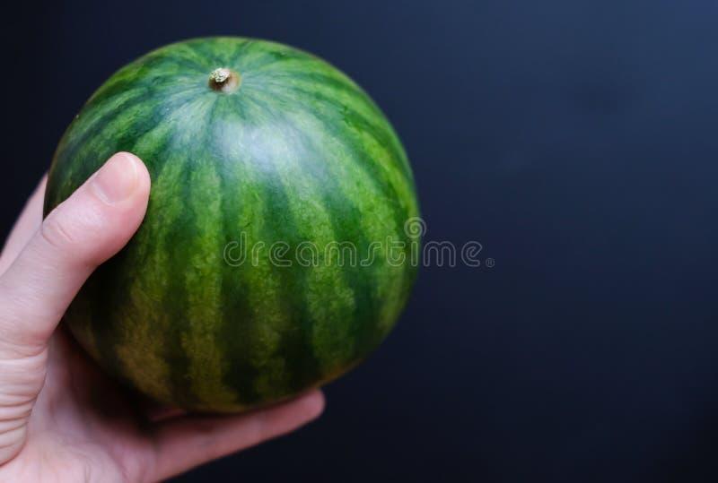 Main du ` s de femme tenant une mini pastèque mûre verte sur un fond foncé photos stock