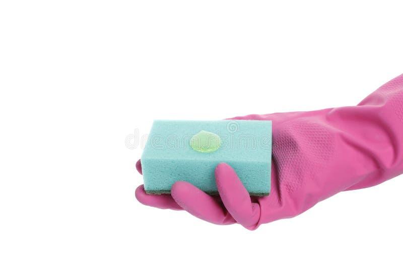 Main enfilée de gants jugeant une éponge d'isolement sur le fond blanc photo stock