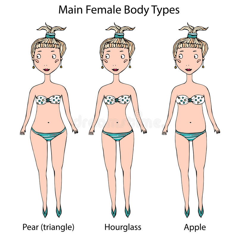 Main Female Body Shape Types. Hourglass, Pear or Triangle and Apple. Realistic Hand Drawn Doodle Style Sketch. Vector. Main Female Body Shape Types. Hourglass stock illustration