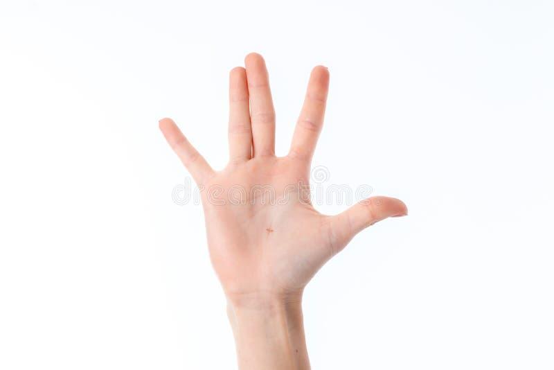 Main femelle étirée avec des doigts augmentés et des paumes d'isolement sur le fond blanc photo libre de droits