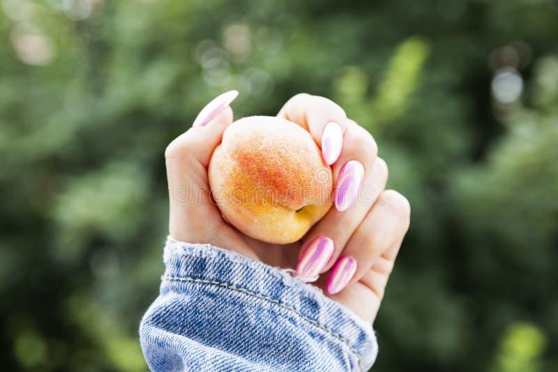 Main femelle avec une belle manucure rose tenant un abricot images stock