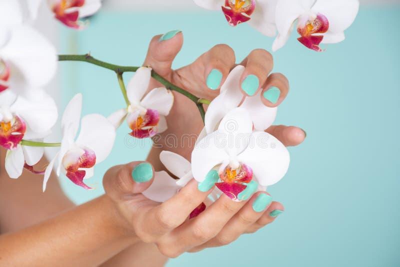 Main femelle avec une manucure de couleur de turquoise sur la fleur d'ongle et blanche d'orchidées d'isolement sur le fond bleu m images stock