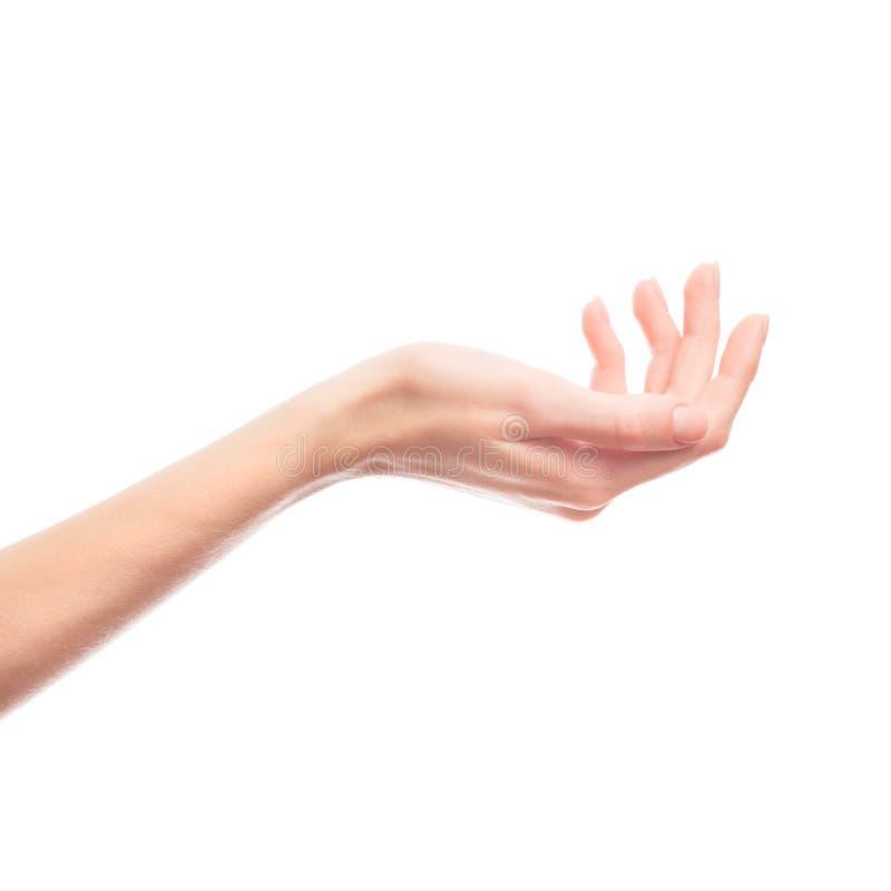 Main femelle d'isolement sur le fond blanc images libres de droits