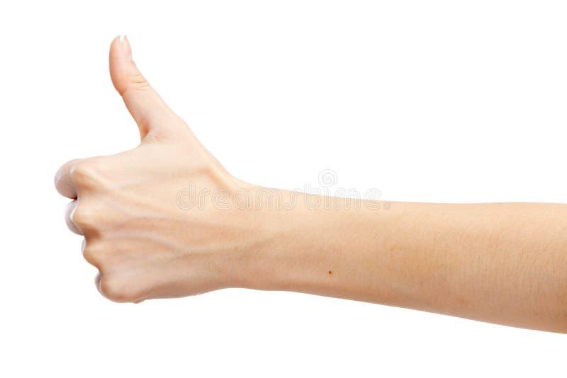 Main femelle d'isolement sur le fond blanc image libre de droits