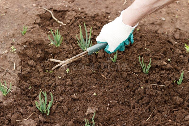 Main femelle dans un gant fonctionnant détachant un lit des outils de jardin photographie stock libre de droits
