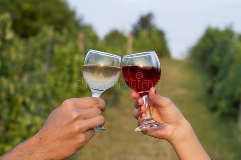 Main femelle et masculine faisant tinter les verres dans le vignoble tandis que dri image stock