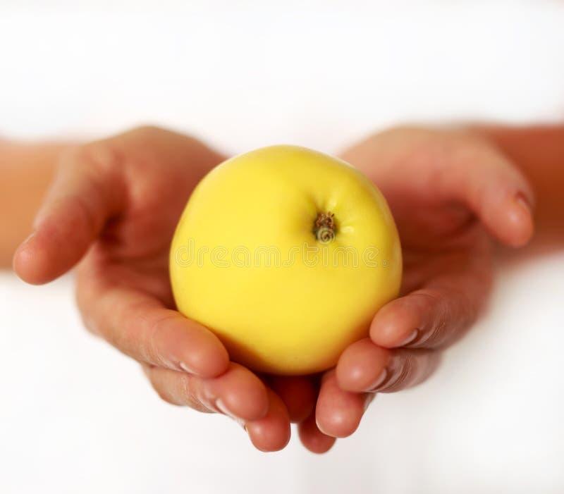 Main femelle tenant Apple sur le fond blanc photographie stock
