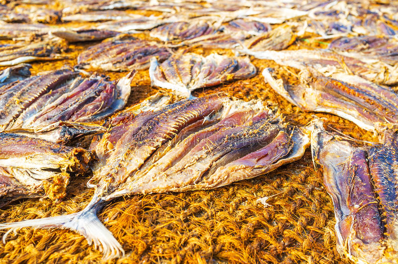 The main fishermen`s food. The sundry is the oldest tradition to preserve fish, it`s widespread in Sri Lankan coastal districts, Negombo stock photography