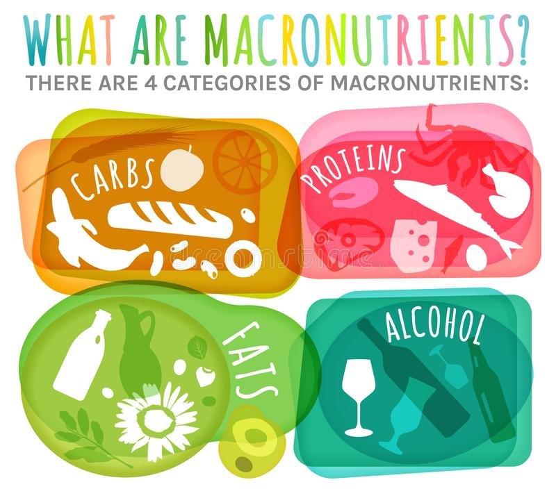 Main food groups. Macronutrients. Carbohydrates, fats, proteins, alcohol in comparison. Dieting, healthcare and eutrophy concept. Vector illustration isolated vector illustration