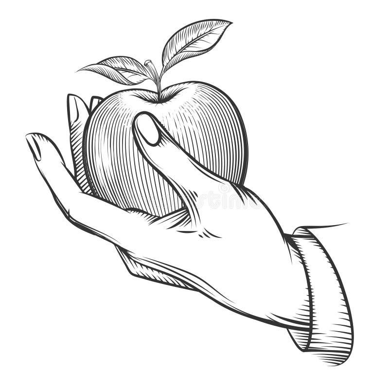 Main humaine avec la pomme dessinée dans le style de gravure illustration stock