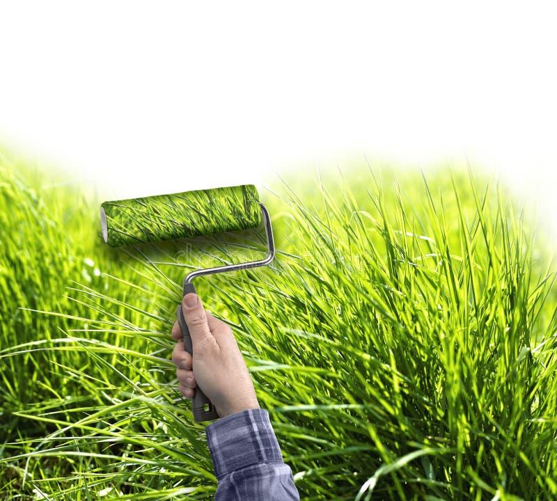 Main humaine avec le rouleau peignant l'herbe vraie sur le mur blanc photos stock