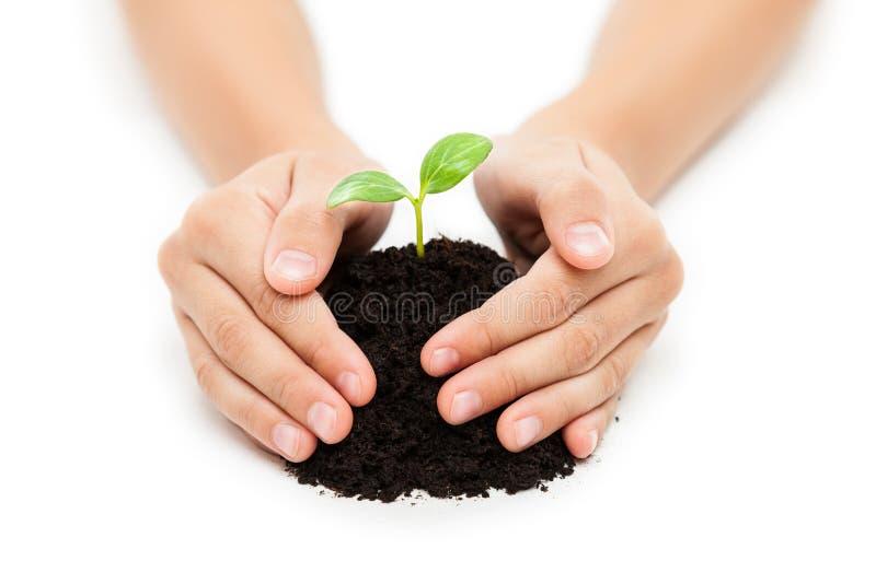 Main humaine tenant la croissance verte de feuille de pousse au sol de saleté images stock