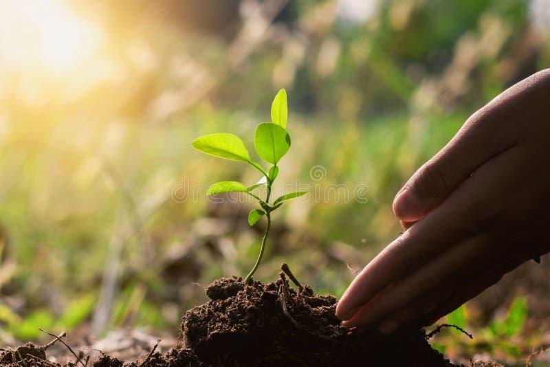 main plantant l'arbre dans le jardin Eco photos stock