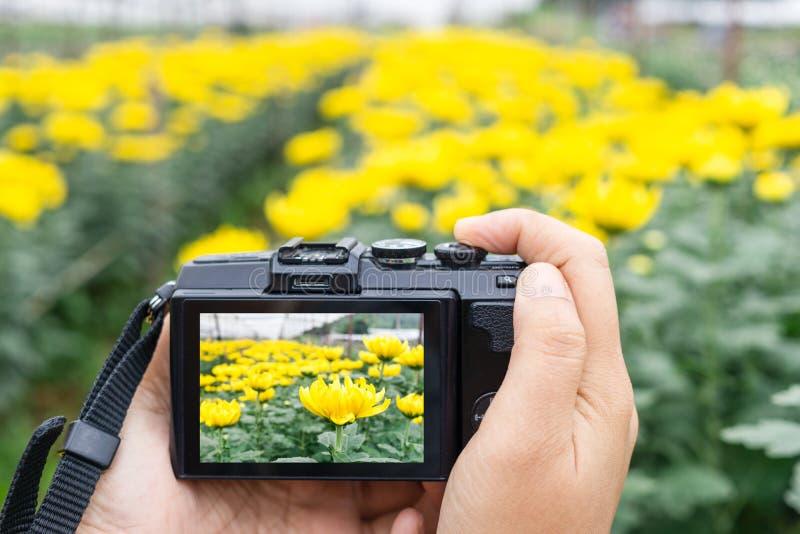Main prenant la photo de belles fleurs avec l'appareil photo numérique mirrorless à la ferme de fleur de chrysanthème photographie stock