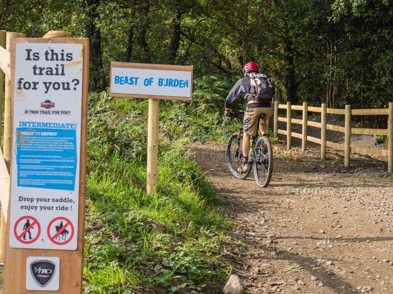 Main riding mountain bike trail royalty free stock photos