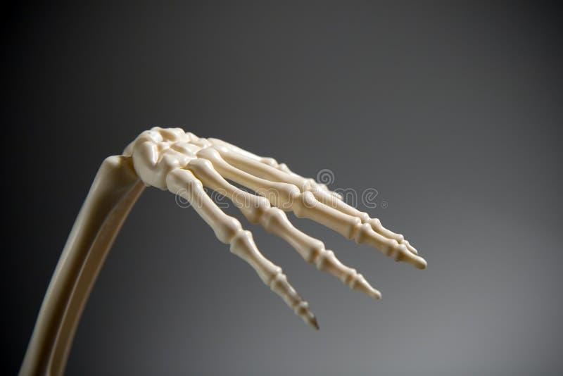Main squelettique images libres de droits