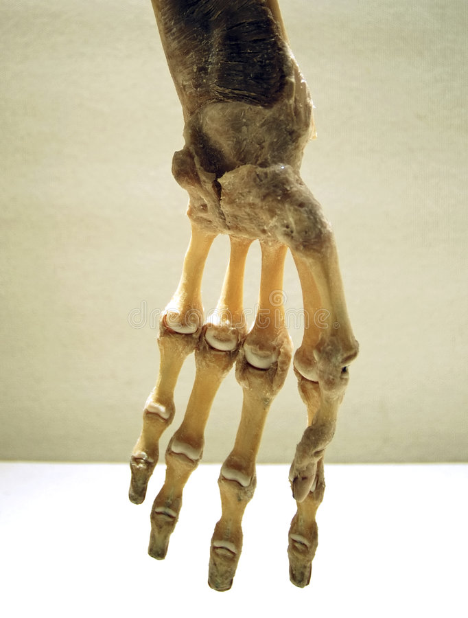 Main squelettique photographie stock